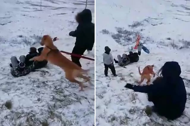 Watch the moment this girl gets pulled down a snowy hill by her dog