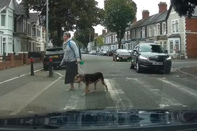Cheeky dog holds up traffic on Welsh road