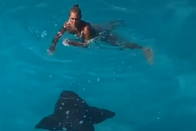 Woman accidentally swims right into the path of a giant shark