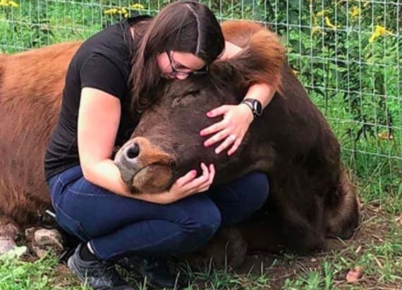 This farm lets you cuddle a cow to reduce stress