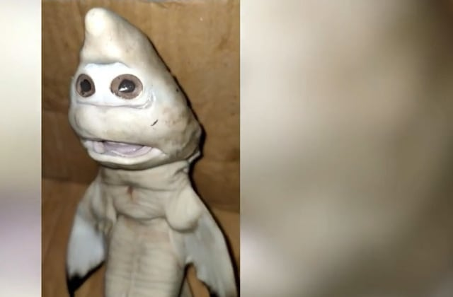 Baby shark 'with human face' found