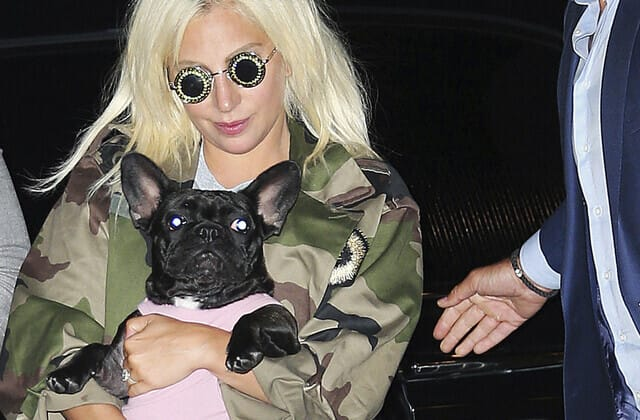 Star's dogs returned after being stolen at gunpoint