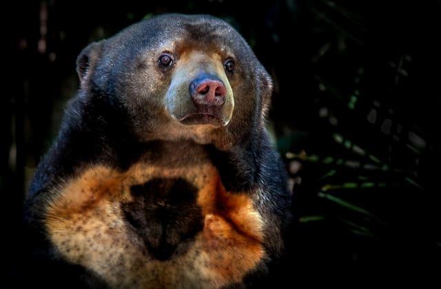 Hybrid animal species that have experts concerned