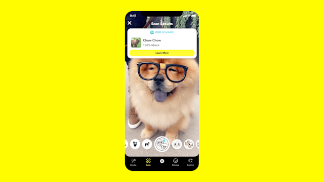 Snapchat's camera can identify dog breeds.