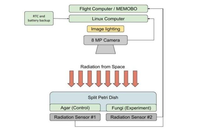 Chernobyl mold blocking space radiation