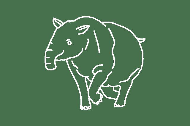 A drawing of a tapir