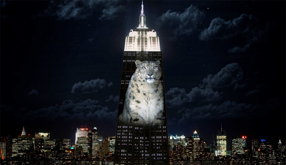 Empire State Building Projection Shines A Light On