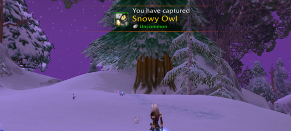 snowy owls now available in winterspring for pet collectors