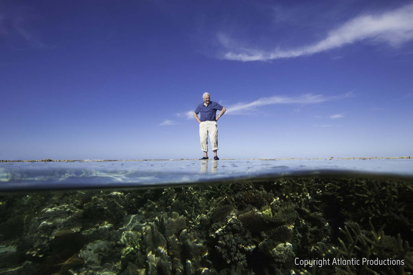 Great Barrier Reef Virtual Tour Google