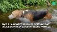 Ouragan Florence: ces chiens abandonnés échappent de peu à la