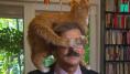 Pologne: son maître avait des choses très sérieuses à raconter, ce chat en a décidé