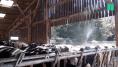 Canicule: ces éleveurs partagent leurs techniques pour rafraîchir leurs