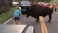 Cet homme a défié un bison du parc de Yellowstone et ça aurait pu très mal se
