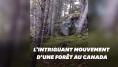 Cette forêt