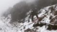 À Hawaï, ce parc national a été recouvert de neige pour la première
