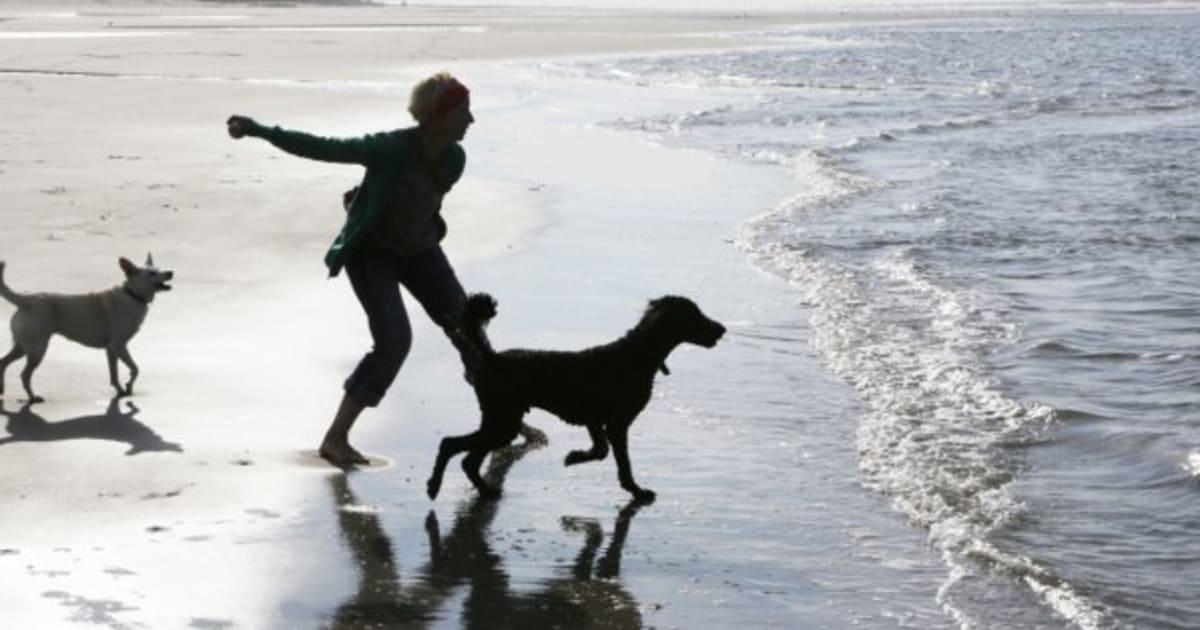 Por qué tener una mascota en casa es bueno para ti