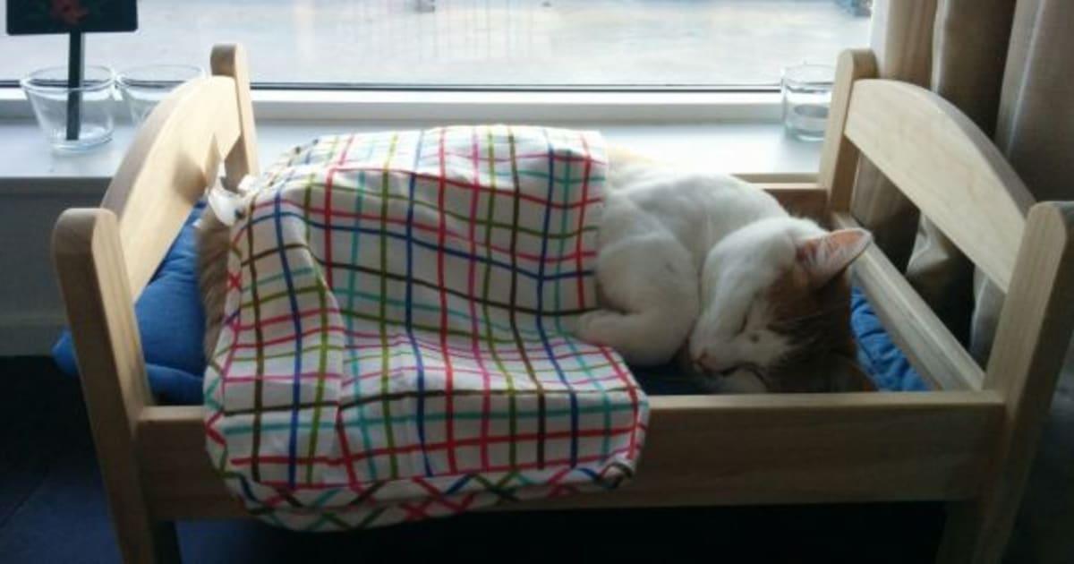 El \'IKEA-hack\' más loco: camas de juguete para que los gatos duerman ...
