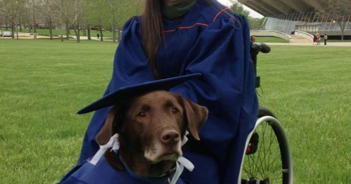 Disabled Student & Service Dog Hero Attend Graduation In Matching ...