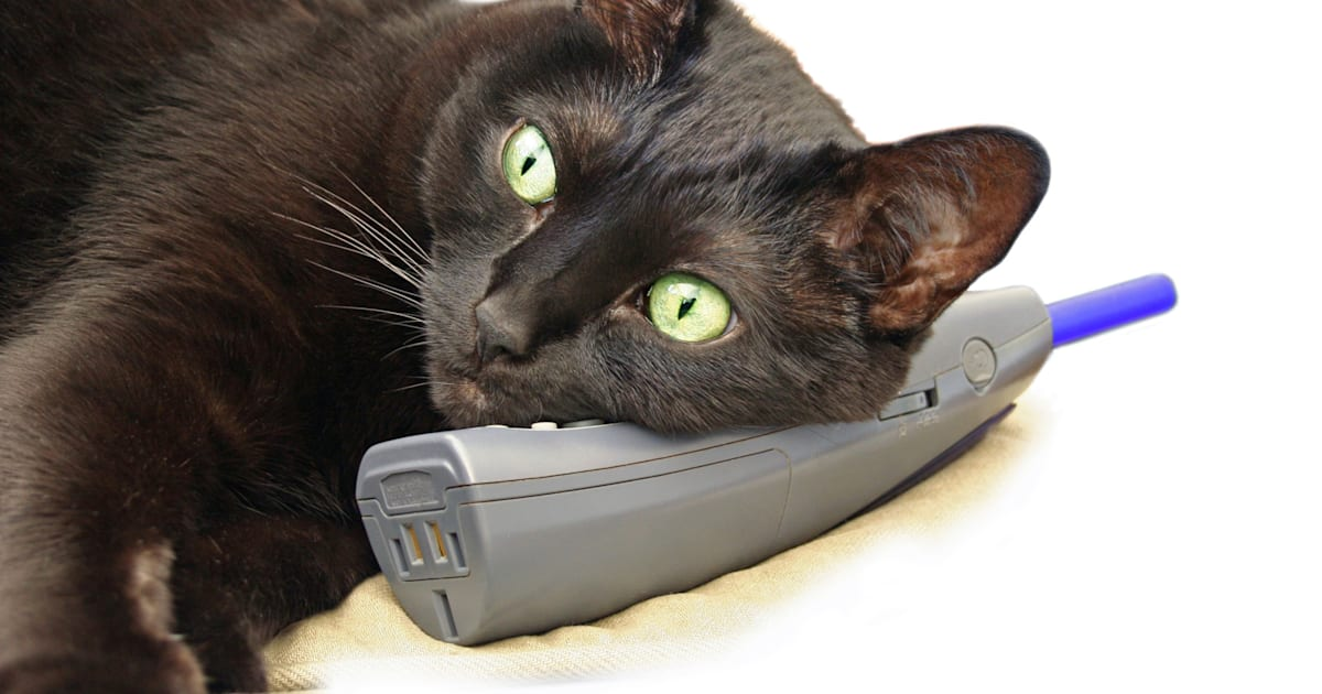 Image result for cat dials phone