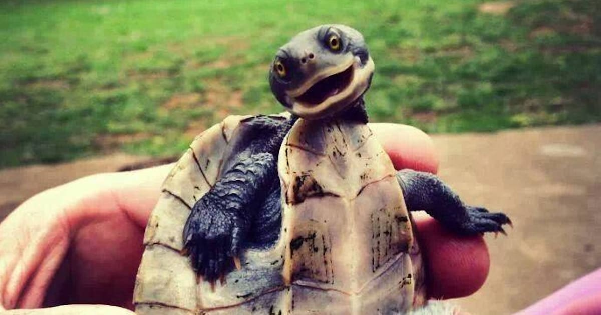 Smiling Turtle