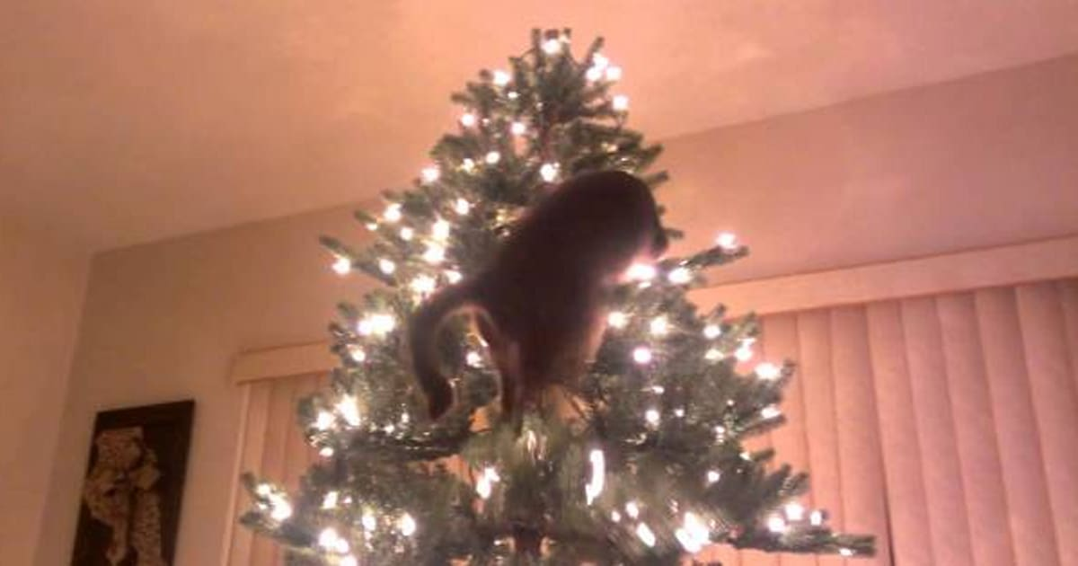 Cats Vs Christmas Trees: A Compilation