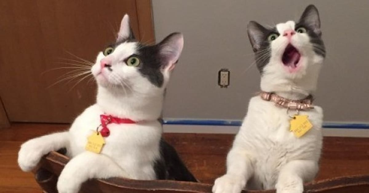 Cats Witness Ceiling Fan Spinning For First Time Huffpost Uk