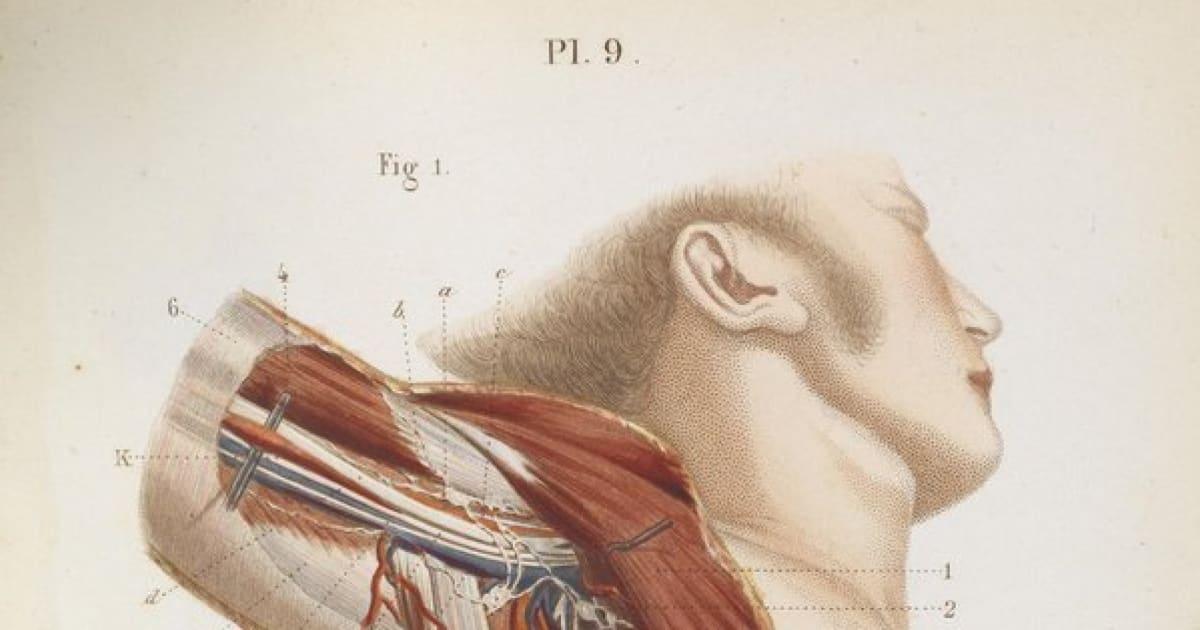놀랍도록 세밀하고 그로테스크한 19세기 의학 드로잉(화보) *주의: 징그러울 수 있음