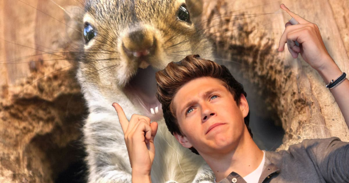 One Direction Star Niall Horan Recovering After Vicious ...