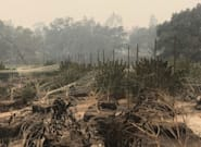It's Not Just Wine Country: California Wildfires Have Hit Cannabis Growers