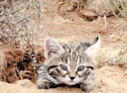 The World's Deadliest Cat Is Absolutely