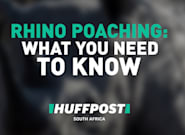 What You Need To Know About Rhino