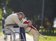 Estas imágenes te harán entender por qué el perro es el mejor amigo del