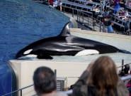 Multa millonaria para SeaWorld por ocultar el impacto del documental 'Blackfish' en su