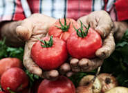 New Study Suggests A Protein Present In Potatoes And Tomatoes Could Cause Alzheimer's