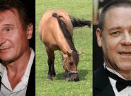 Liam Neeson et Russell Crowe ont des partenaires de tournage très