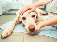 El emotivo mensaje de un veterinario sobre cómo actuar cuando tienes que sacrificar a tu