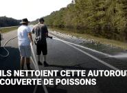 Une autoroute recouverte de poissons par l'ouragan