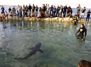 Manly Pool Shark 'Fluffy' To Be Released Back Into The