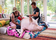 Esther, The Celebrity Pig, Has Been Diagnosed With