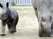 En Ardèche, l'incendie du zoo de Peaugres revendiqué sur un site