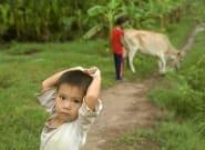 Les enfants vivant près d'une forêt, dans les pays en développement, auraient un régime alimentaire plus