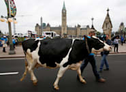 Blame The Dairy Lobby For Putting Canada In Trump's