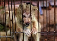 RSPCA Inspectors Get More Power In Victorian Animal Cruelty