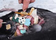 Noruega tiene un enfoque radical sobre la contaminación del plástico, y