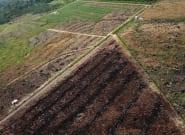 Huile de palme: Nestlé, L'Oréal et Colgate-Palmolive accusés par Greenpeace de contribuer à la