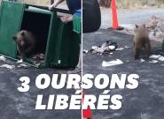 Les trois oursons bloqués dans cette poubelle peuvent remercier les
