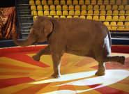 Mon travail dans un cirque m'a fait découvrir une triste