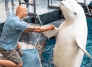 La visite de Dwayne Johnson dans un aquarium n'est pas passée auprès de tous ses