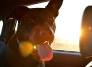 7 consejos para que tu mascota también disfrute de las