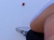 Un boli mágico detiene a un bicho: el vídeo arrasa en